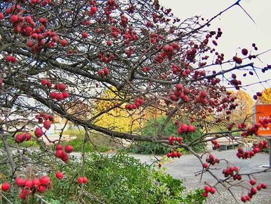 Foto del Tiergarten en primavera